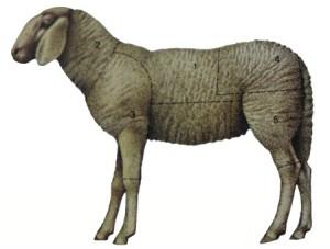 La carne ovina e caprina