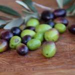 Olive a Scabecciu_1